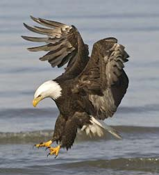 You might even see a bald eagle on your Black River float trip