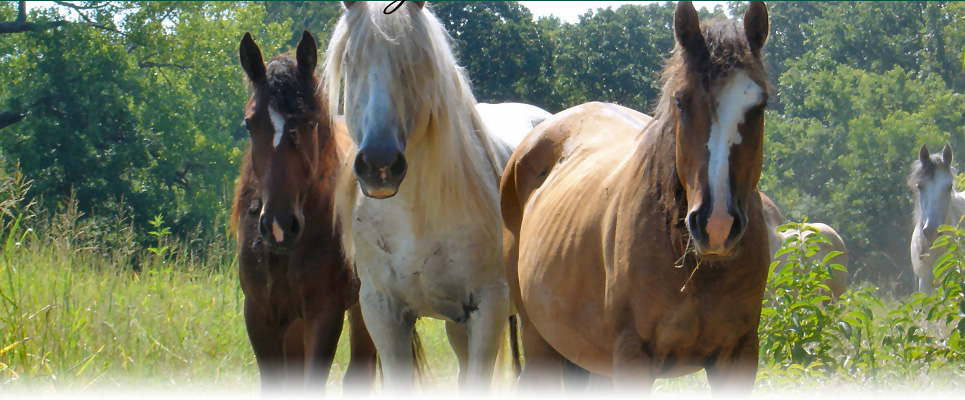 Missouri horseback riding, trail rides and boarding, Ironton, MO in the Ozarks near St. Louis - Arcadia Valley Stables